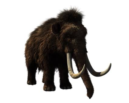 Wooly Mammoth2
